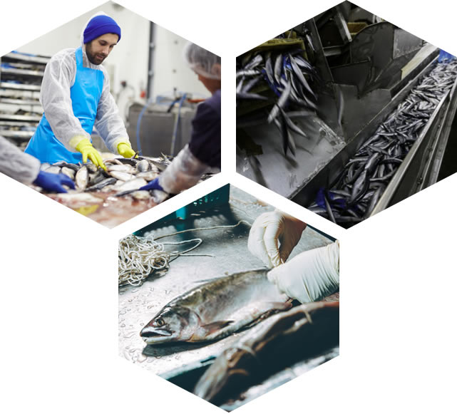 Rozwiązania informatyczne APLOK wspierające procesy przetwórstwa ryb